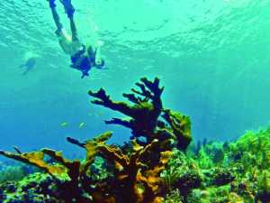 Molasses Reef Florida Keys Names