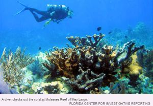 Molasses Reef