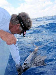 Sailfish Release