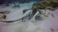 Florida Keys Sea Creatures