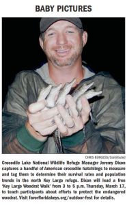 American Crocodile Hatchlings