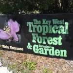 Protecting Plants