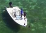 Sharks of Big Pine Key