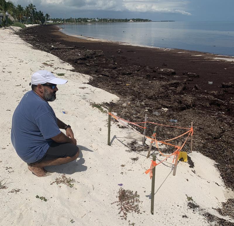 Sargassum Problem – Florida Keys Look Looks for Solutions
