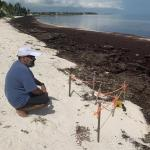 Keys Look To Local Solutions For Widespread Problem - Sargassum