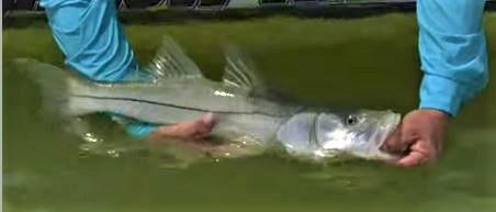 Fishing Key Largo