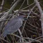 Free Guided Bird Hikes at Weedon Island Preserve