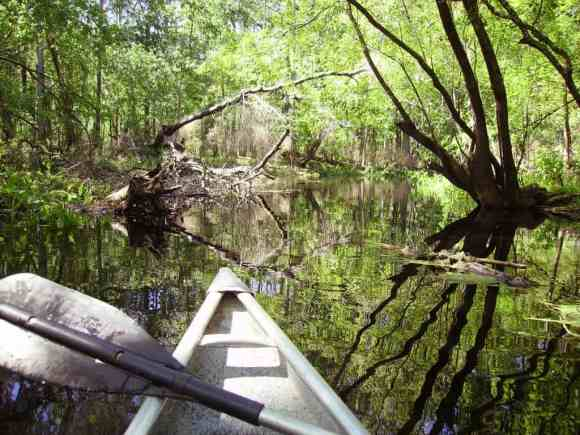 Florida canoe trails and kayaking: The Withlacoochee is among Florida's most scenice paddles.