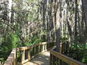 Cypress Swamp Boardwalk