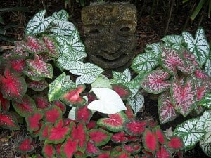 Caladiums with tiki sculpture at Washington Oaks Gardens State Park, Palm Coast