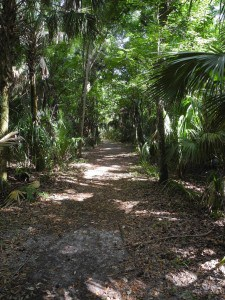 Cypress Swamp Trail aHighlands Hammock State Park in Sebring.