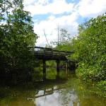 Kayak trail winds under boardwalk's bridge at St. Lucie Inlet Preserve State