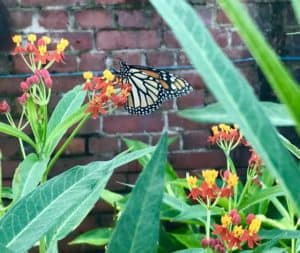 The butterfly garden at West Martello Tower were aflutter with life. (Photo: Bonnie Gross)
