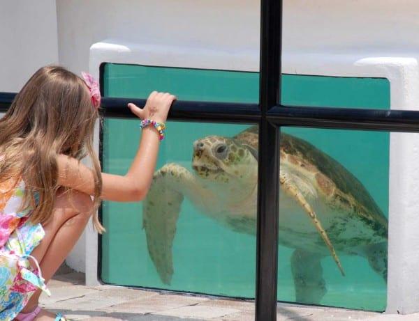 Turtle rehab tank (Photo courtesy Loggerhead Marineline Center)