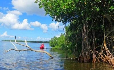 Kayaking near Matlacha.