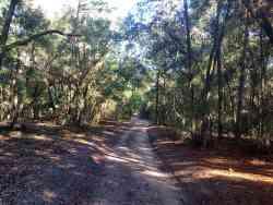Multi-use trail in Lower Wekiva River Preserve State Park
