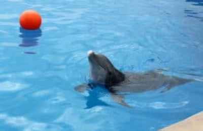 Dolphin at Marineland today. (Photo: Doug Alderson)
