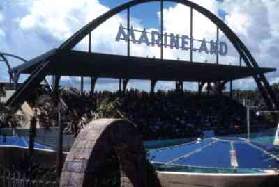 View of the spectator stands at the Marineland attraction. State Archives of Florida, Florida Memory.