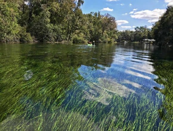 The water in the Rainbow River is so clear you see th bright-green eel grass waving in water. (Photo: Bonnie Gross)