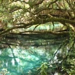 canstock-juniper-springs
