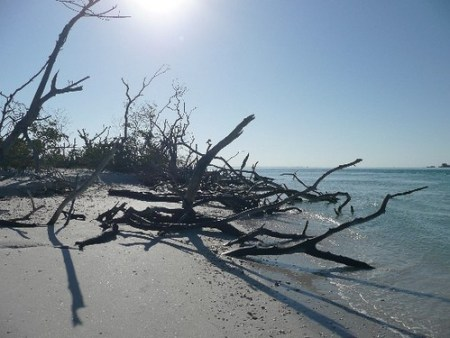 One of the best Florida beaches: Cayo Costa