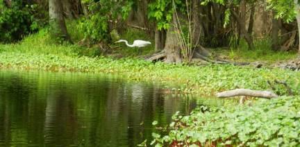 Kayaking around Hontoon Island State Park