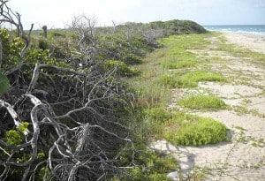 MarArthur Beach State Park, North Palm Beach, Florida
