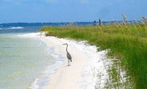 Best Beach Camping In Florida S Panhandle Florida Rambler