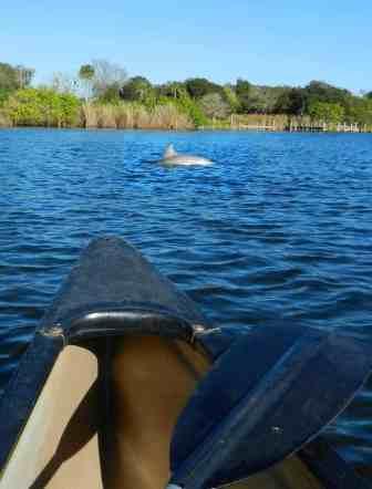 Turkey Creek in Palm Bay dolphin