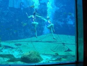 Mermaid show at Weeki Wachee Springs State Park in Florida