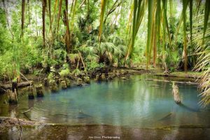 Springs Outing – Seminole State Forest