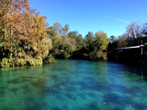 The past and future glory of Silver Springs