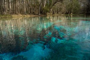 A New Year's Resolution for Florida's Springs