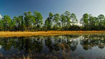 The Florida Trail winds through scenic ponds on Juniper Wilderness.