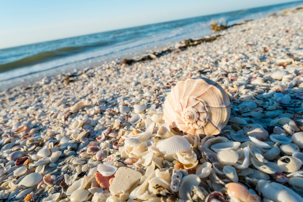 Shell Collecting Myrtle Beach