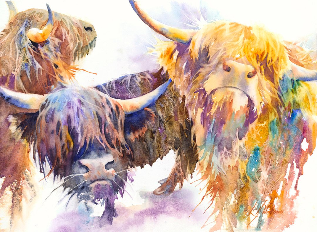 Wokoun, Linda - Highland Cattle