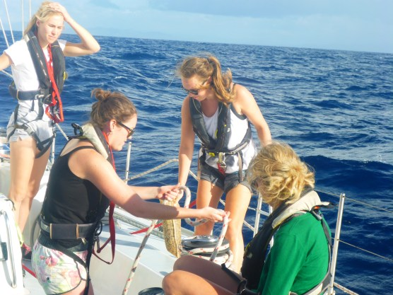 Plastics from manta trawler