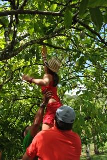 Republica Dominicana -Eco Caribe Tour-La cules de cacao