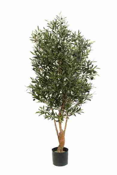 Olivo 1.80 cm mediterráneo, New buisson