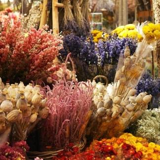 Preservado, flores eternas