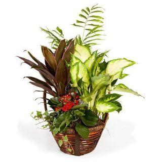 cesta-de-plantas-variadas-con-amarantha-y-kalanchoe
