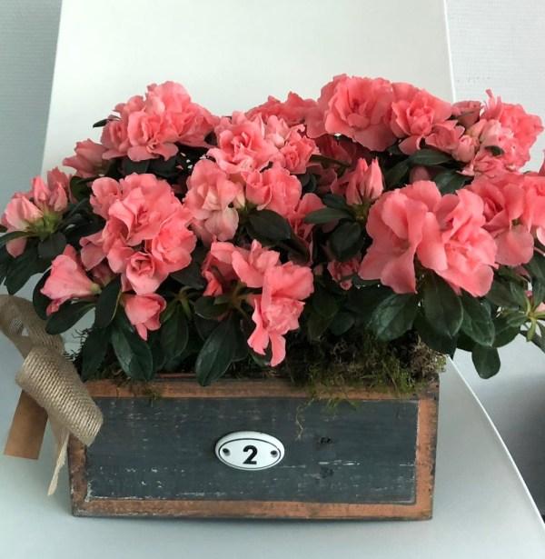 Caja de azaleas