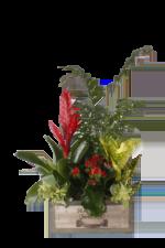 Plantas y Cestas y Composiciones. Floristería Pétalos · Tienda Online con envío a domicilio en Alcalá de Henares · Madrid