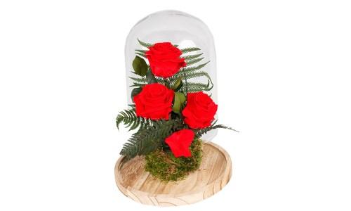 Cúpula 3 Rosas Eternas Rojas. Floristería Pétalos · Tienda Online. Gran selección de complementos florales: jarrones, maceteros, cestas para flores y plantas. Haz tu pedido online y recibe el envío en tu domicilio.