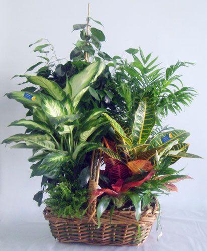 Cesta de plantas