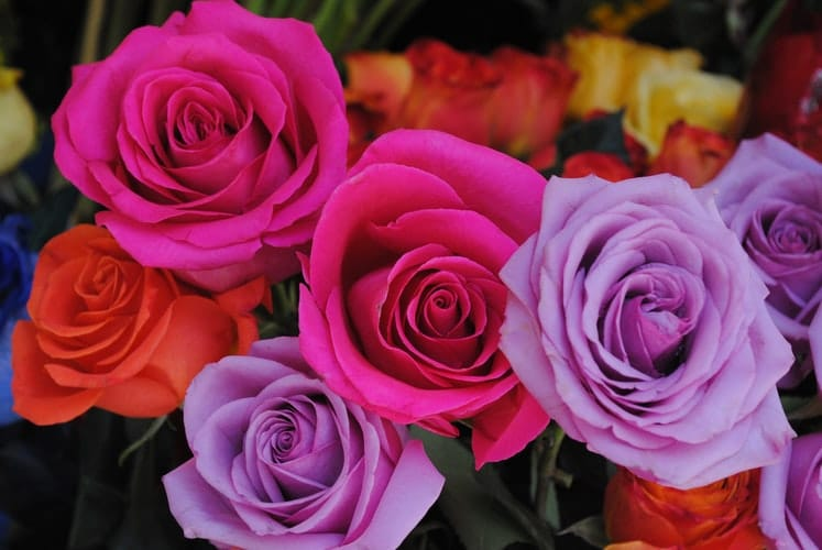 nvío flores a domicilio en Tijuana