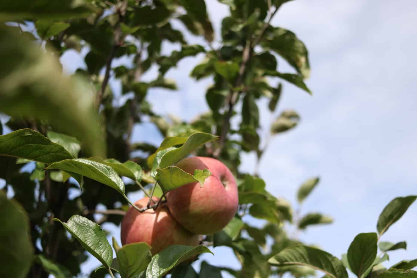 Spend a Day at Crane's Orchards, Restaurant, and Winery