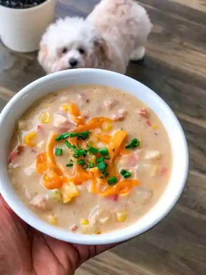pup looking at a bowl of corn and potato chowder
