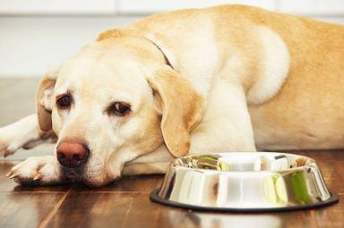 Hond wil niet eten tips