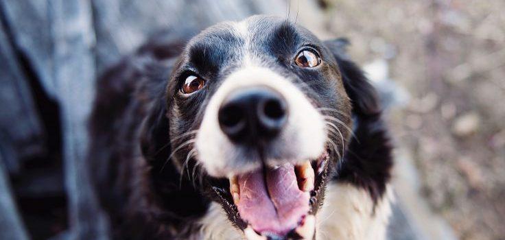 Checklist: is je hond gezond?
